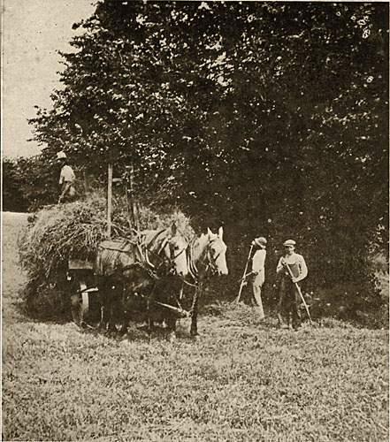 Collecting Hay, 1918